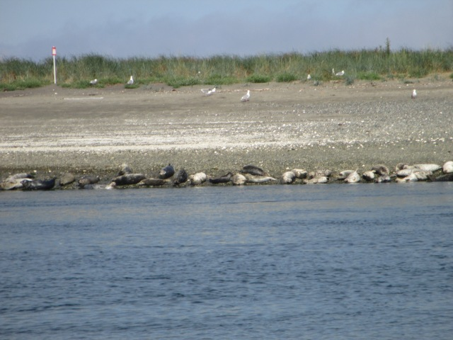 Wildlife at Marrowstone Island